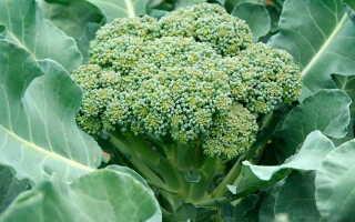 Выращивание капусты брокколи видео