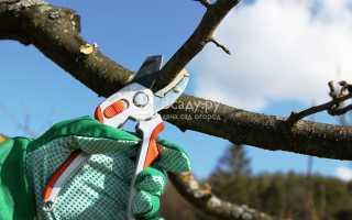 Садовый мир обрезка яблони видео