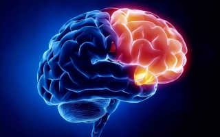 Дистанционное обучение по неврологии